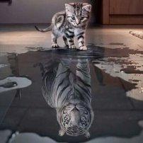 Gatito-Tigre
