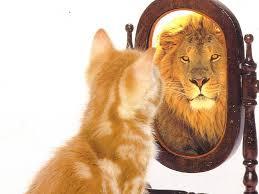 león-gatito